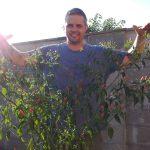 A Madárszem chili hatalmasra nőtt